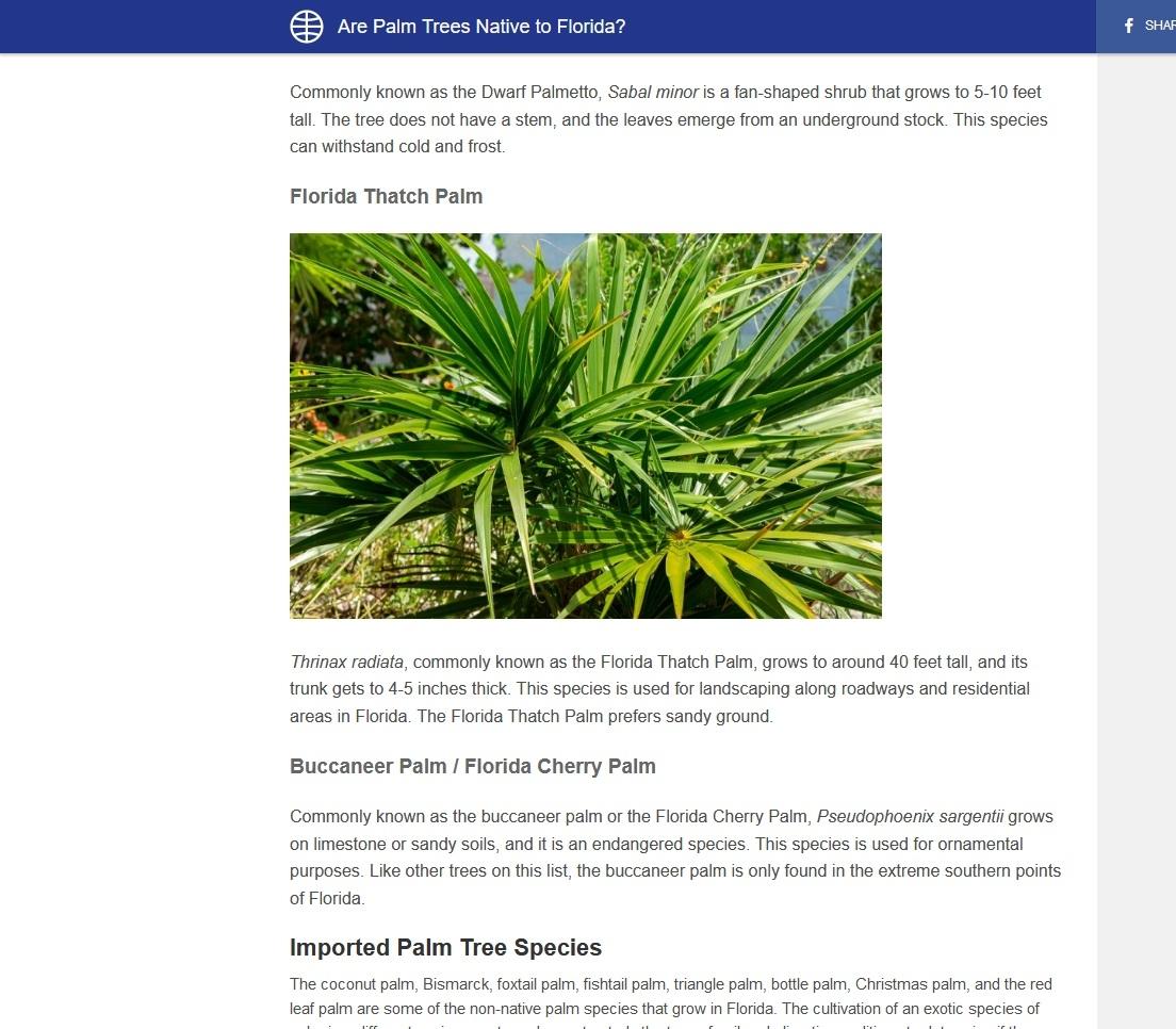 Florida thatch palm (WorldAtlas.com)