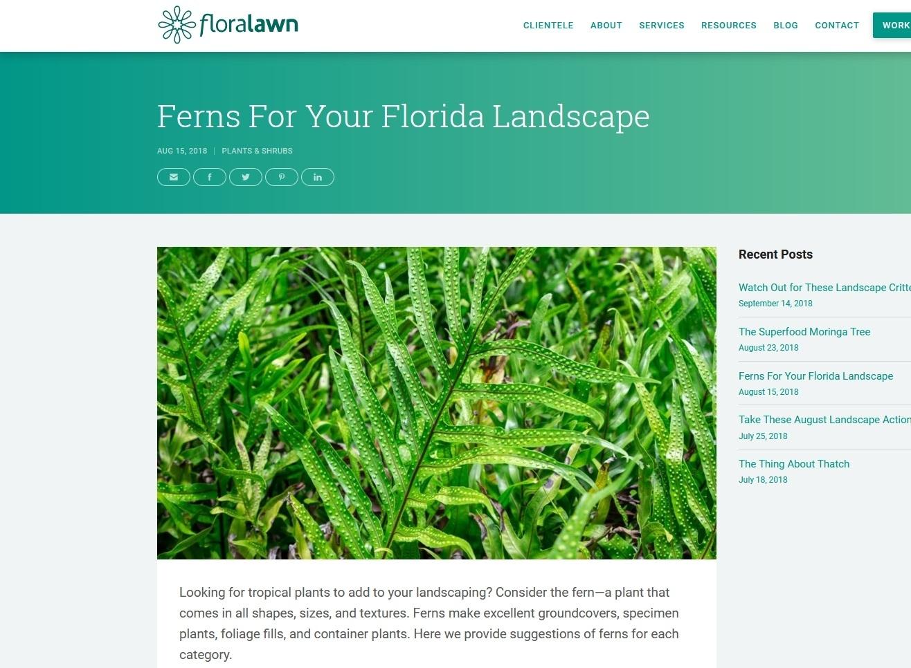 Wart fern (FloraLawn - Lakeland, Florida)