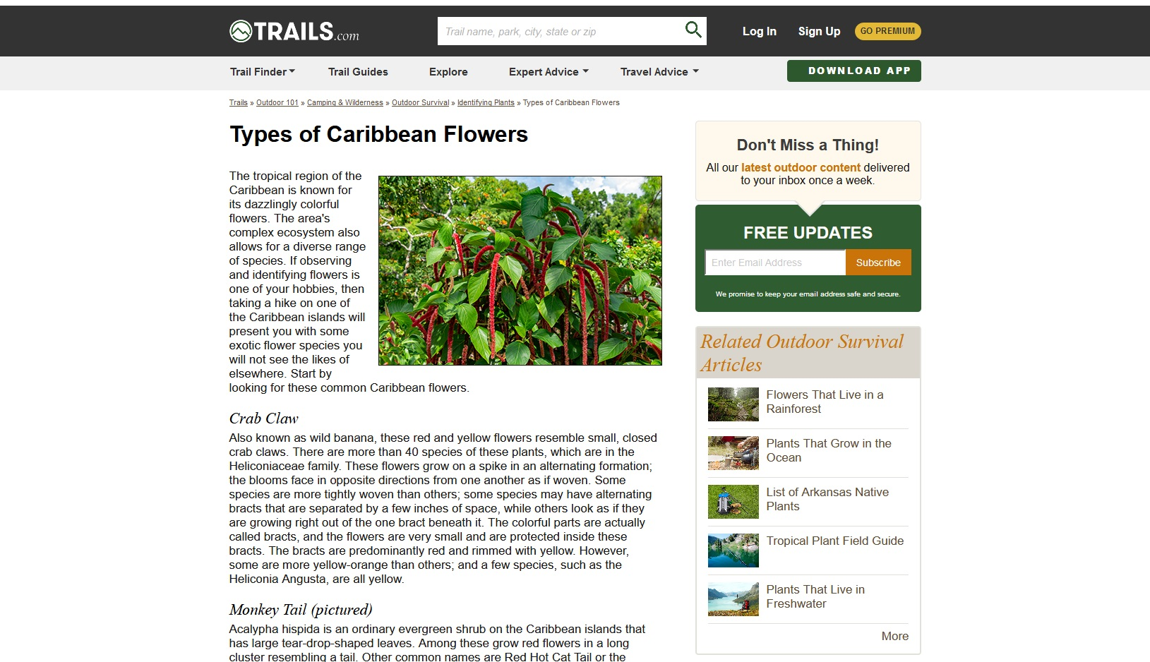 Monkey Tail plant (Trails.com)
