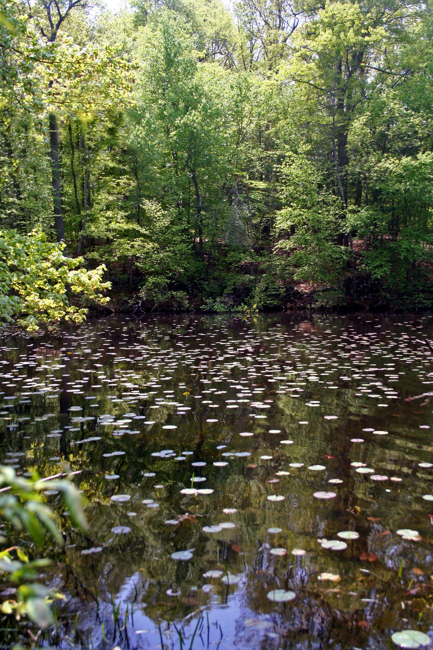 lily pad lake.jpg