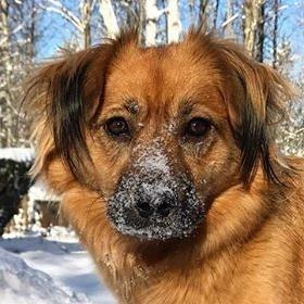 ARF alum Lila loves winters in New Hampshire