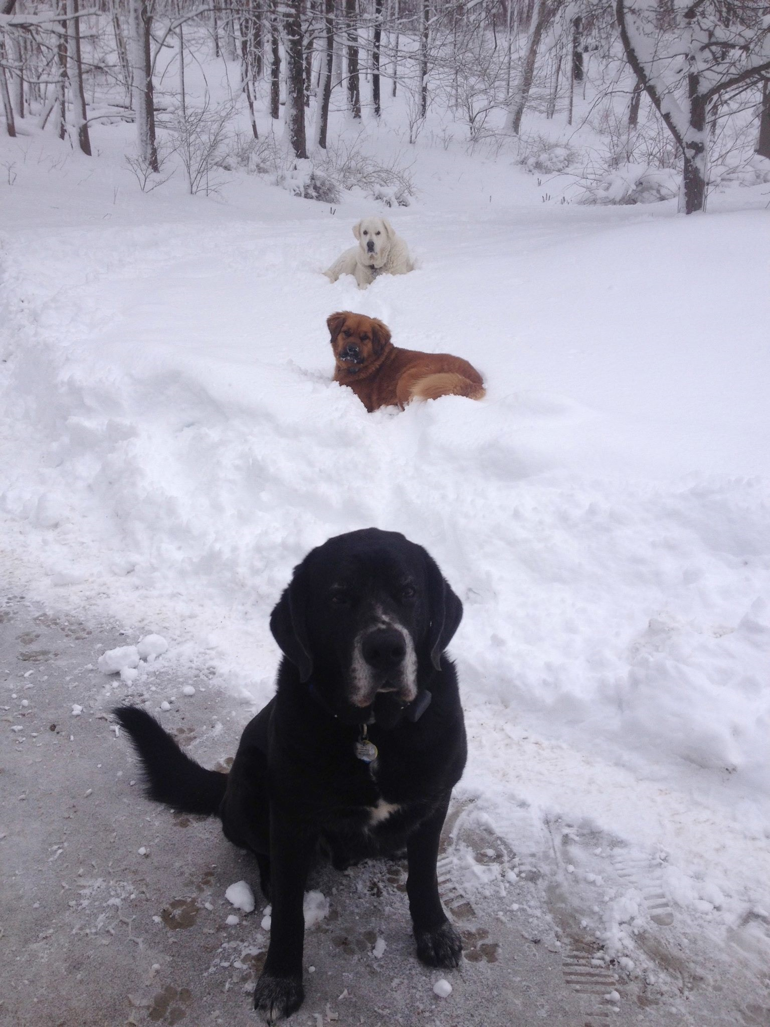 Bo Riley and Friend in snow.jpg