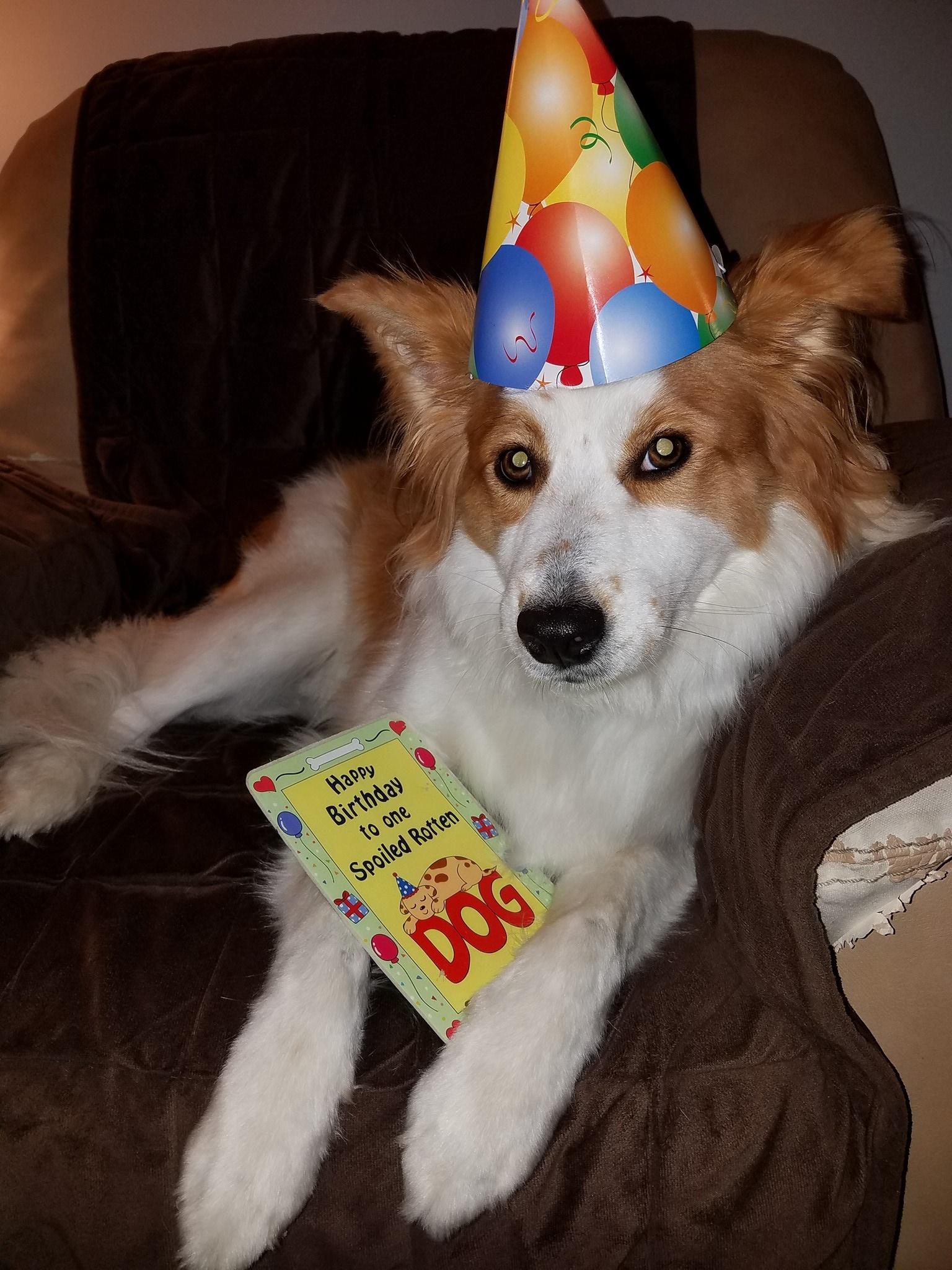 Lucy formerly Nutmeg birthday photo.jpg