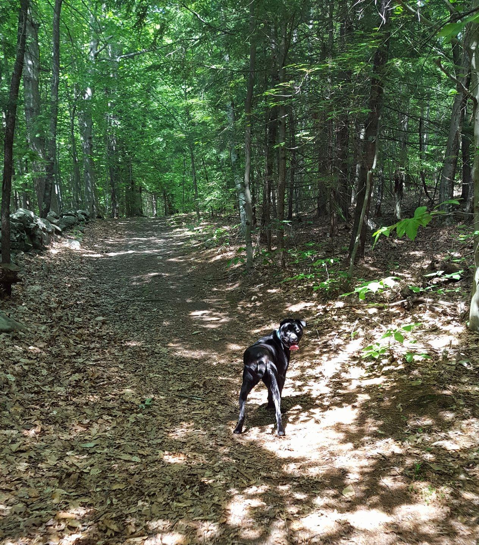 Mickey walk in the woods.jpg
