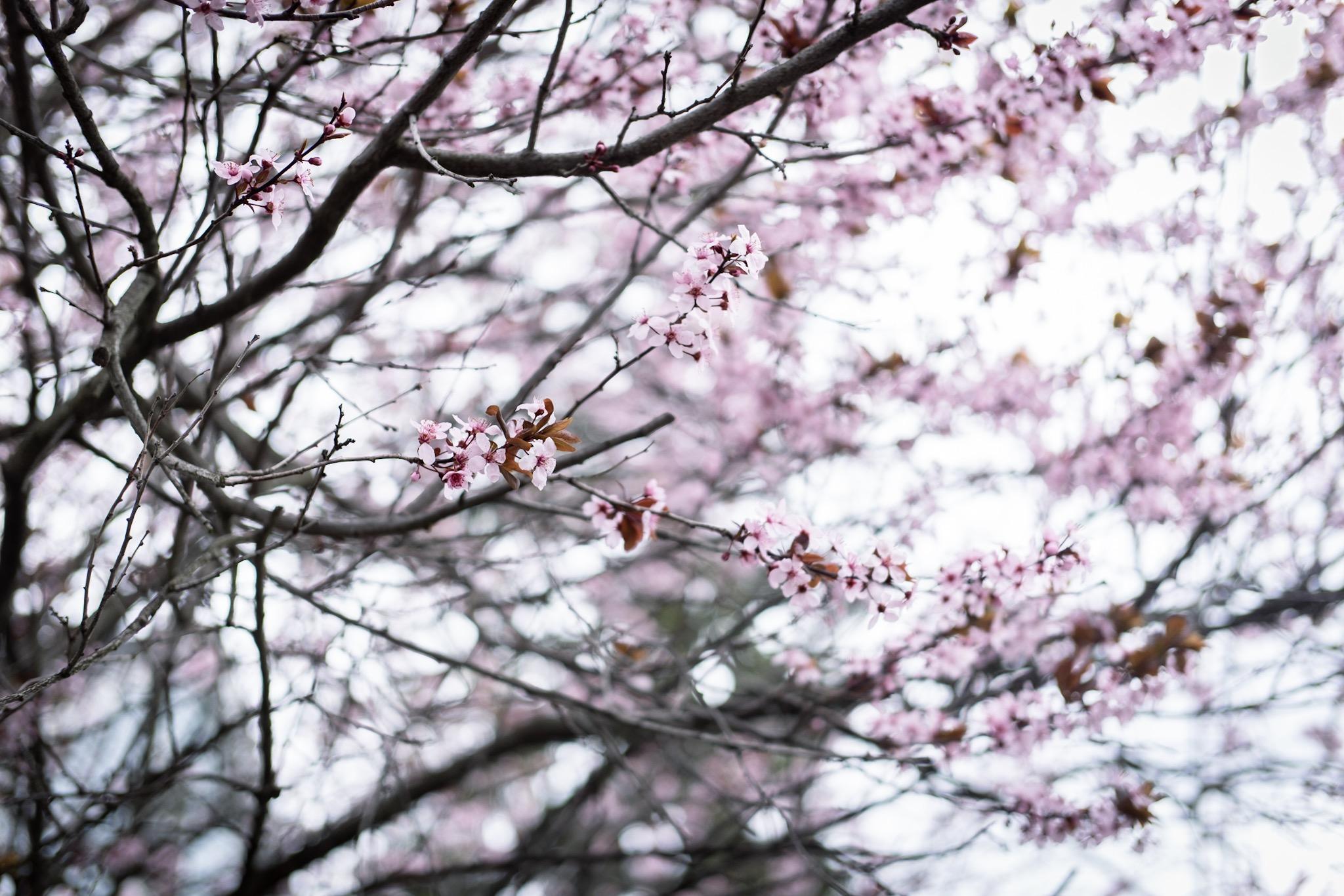 Photo 21-04-2019, 13.51.36.jpg