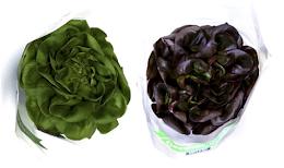 1 unid. alface lisa verde ou roxa