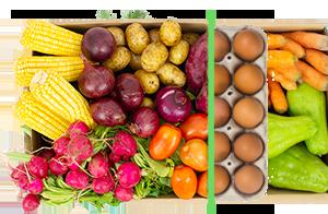 Legumes + ovos - BENEFÍCIOS INCLUSOS> Sua cesta personalizada> + 1 dúzia de ovos orgânicos> Apenas + R$ 14,99 por entrega