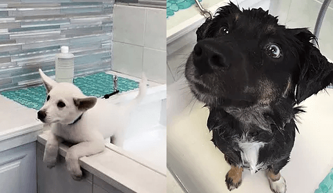 $11.99 SELF-SERVE PET WASH - At Pet Nirvana we offer Full-Time Grooming for your pets. We cater to all dogs breeds and cats. Choose from our self-serve pet wash station or book an appointment with one of our professional groomers. Appointments are booked as early as 8 AM Monday thru Saturday.