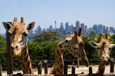 Taronga Zoo.jpg