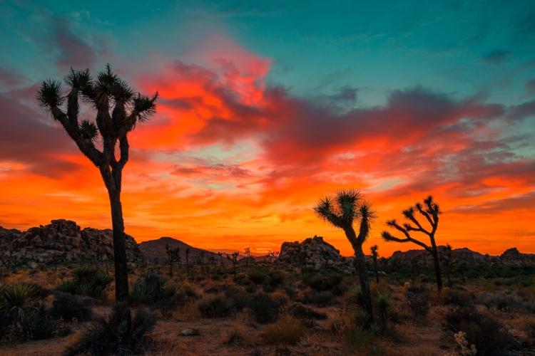 Arizona_JoshuaTree_01.jpg