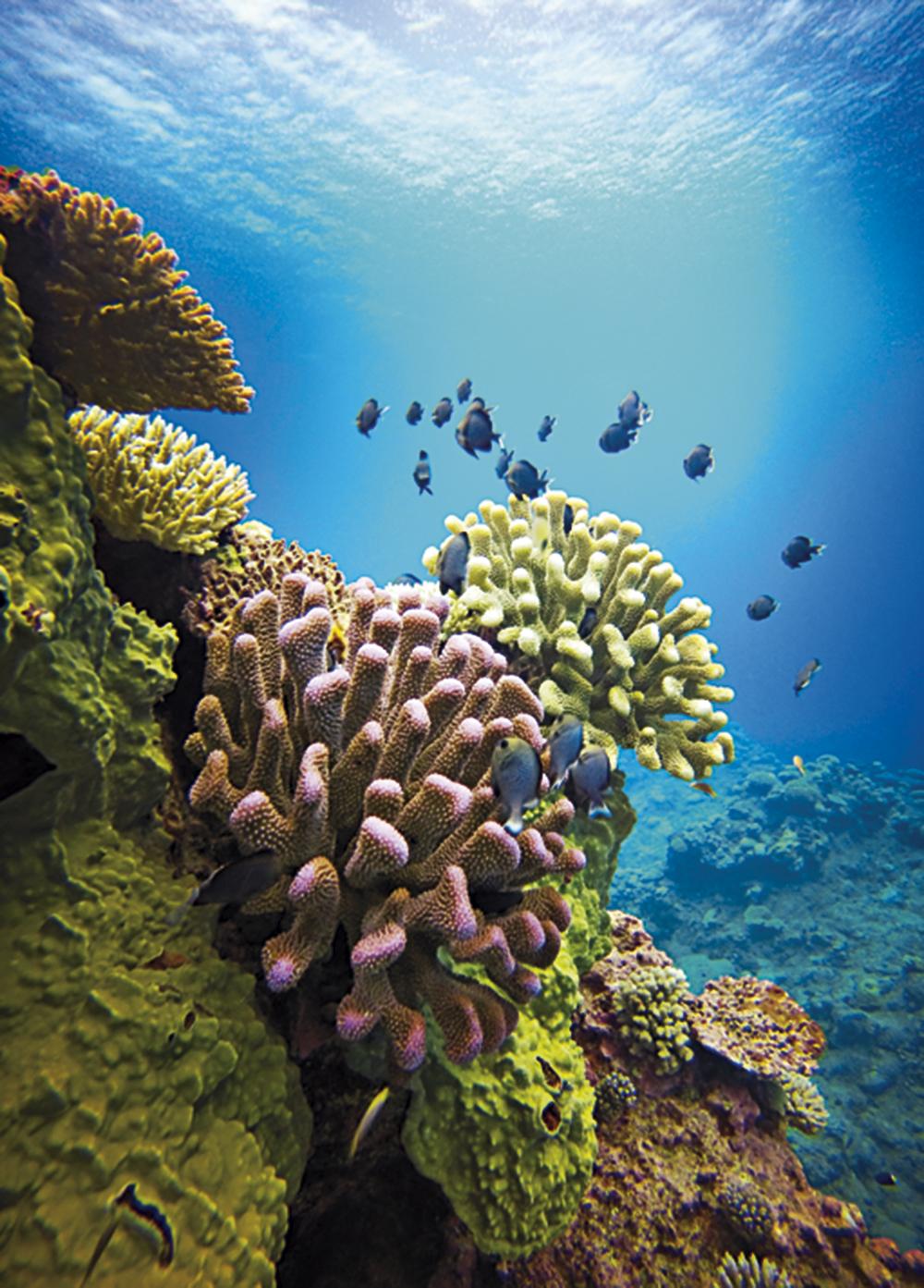 Niue 16.jpg