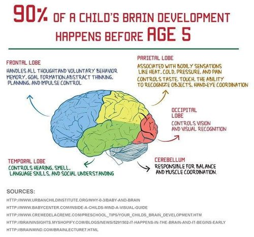 Brain+development+before+age+5.jpg
