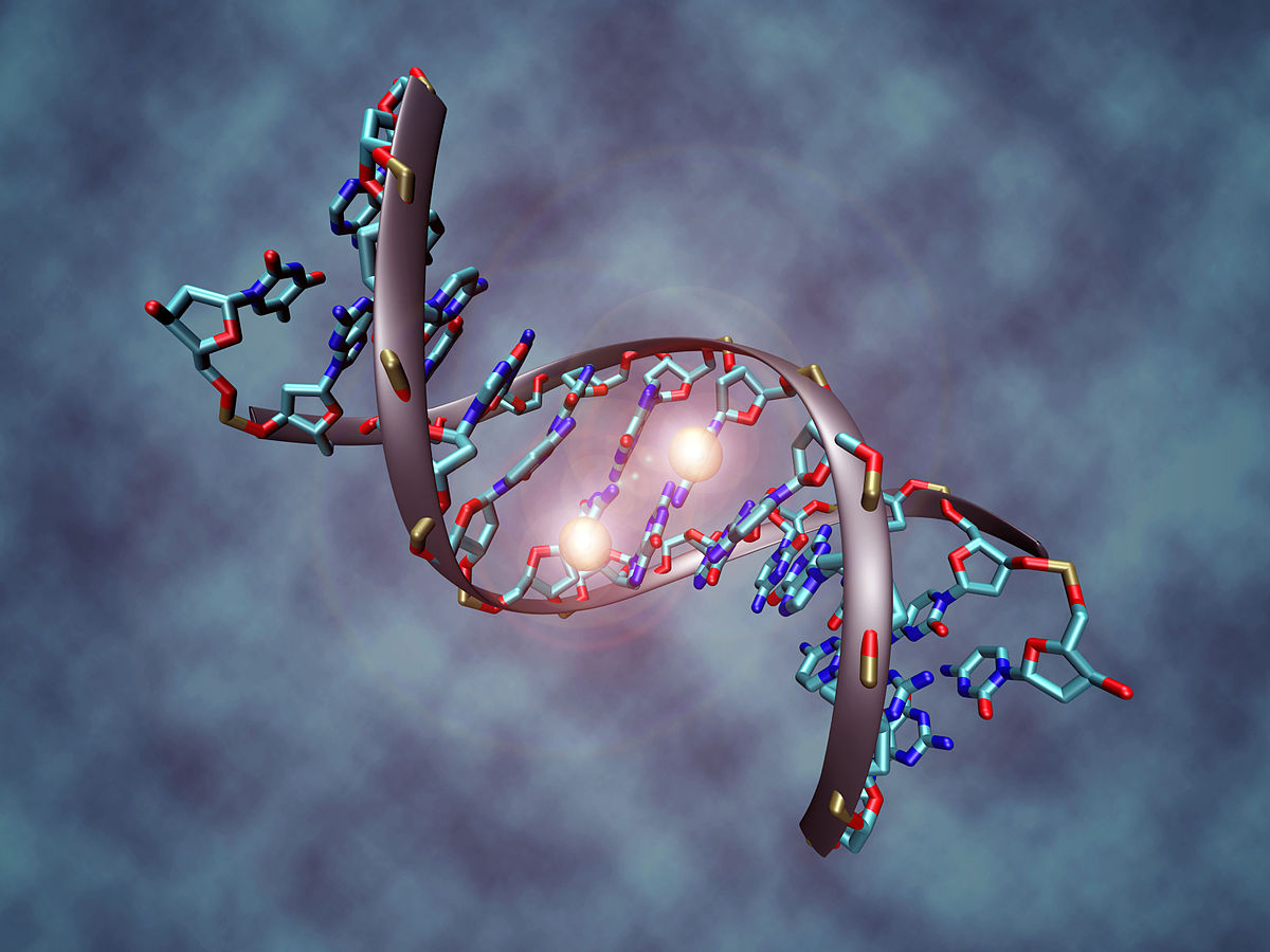Artist's rendition of DNA methylation. By Christoph Bock (Max Planck Institute for Informatics) - Own work, CC BY-SA 3.0