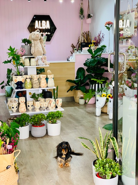 Our flower pup Frankie at our Nobby Beach store