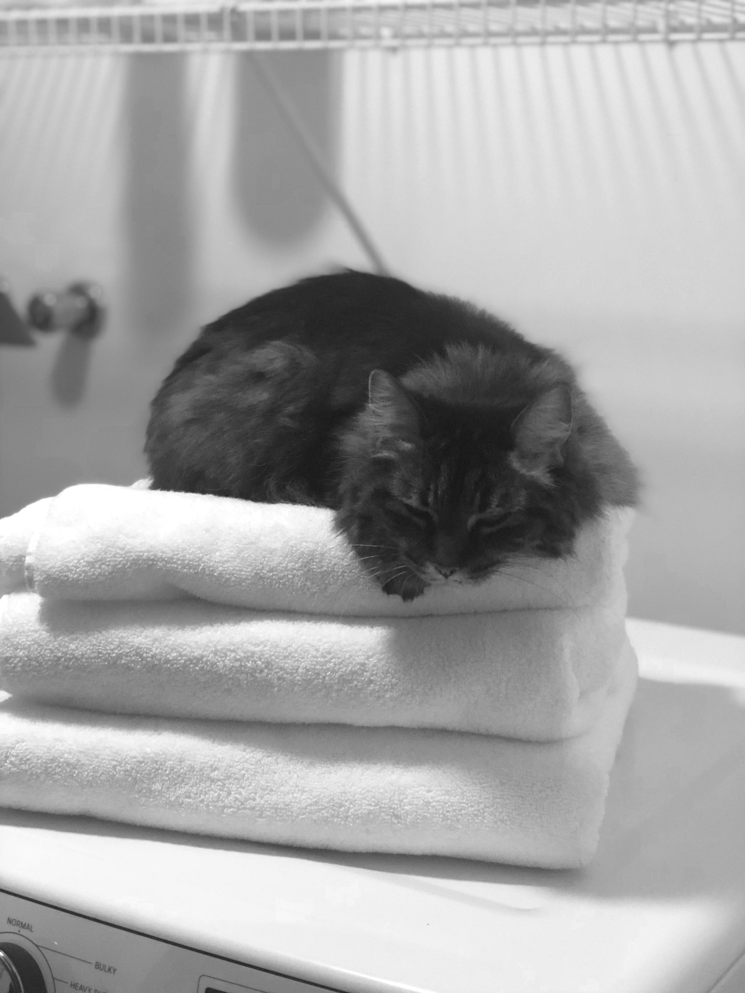 JD's cat, Mips, bastard long-hair breed.