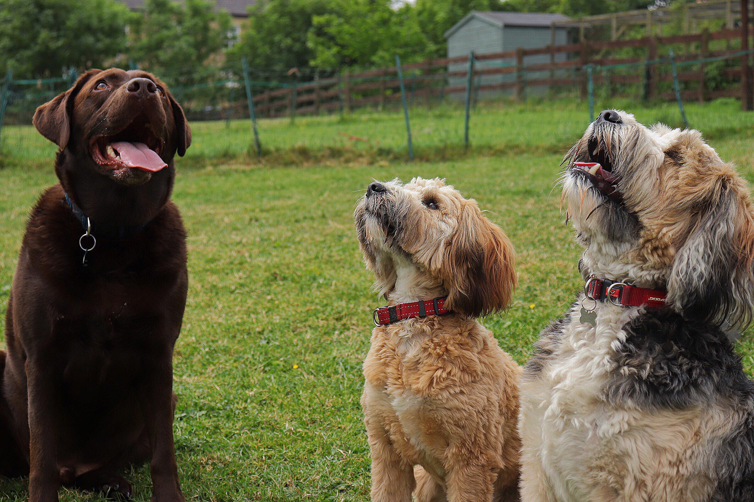 Monty, Jim and Rita