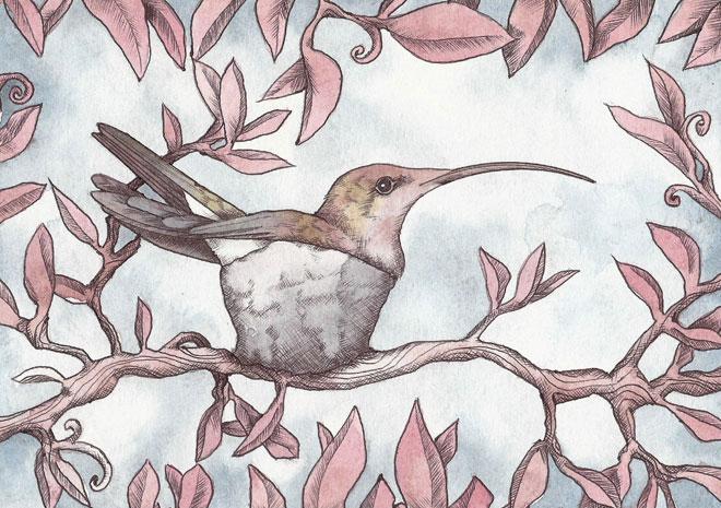 nested-hummingbird-watercolour.jpg