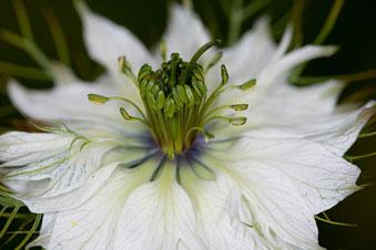 flower_roger_smith.jpg