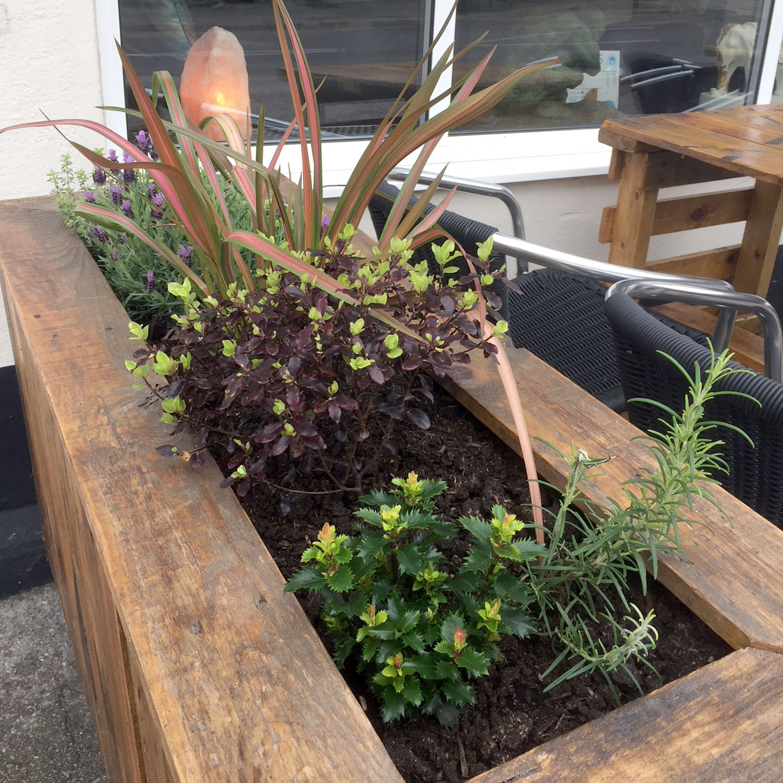 floral-planter-outside-white-stones-art-cafe-gallery-portland-dorset.jpg