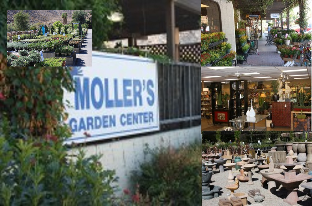 MOLLER'S GARDEN CENTER - Moller's Garden Center, Inc laid its roots in the Coachella Valley in the mid fifties. From tropical to desert landscapes, contemporary to traditional plantings, our sales associates are well versed in the endless options for home and commercial landscape. Moller's Garden Center is well known for its huge selection of unique and hard to find plants. We have an eclectic assortment of home accessories from around the world, including everything for your kitchen to garden.72-235 Painters Path Palm Desert, CA 92260 Phone: (760) 346-0545