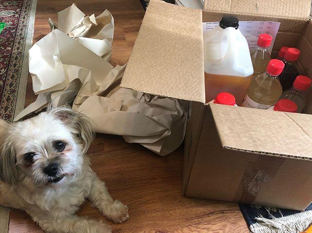 Ateljeella laaduntarkistaja käy läpi juuri saapunutta pakettia. Tänään tuli postissa 15 kg maalausnesteitä. Eiköhän näillä pärjätä koko syksy!  #atelierdog #ateljee #taidekurssi #takahuhdintaidekeskus #tampere #ateljeeemmimustonen #koira #taiteilija #taidemaalaus #pellavaöljy #öljyväri