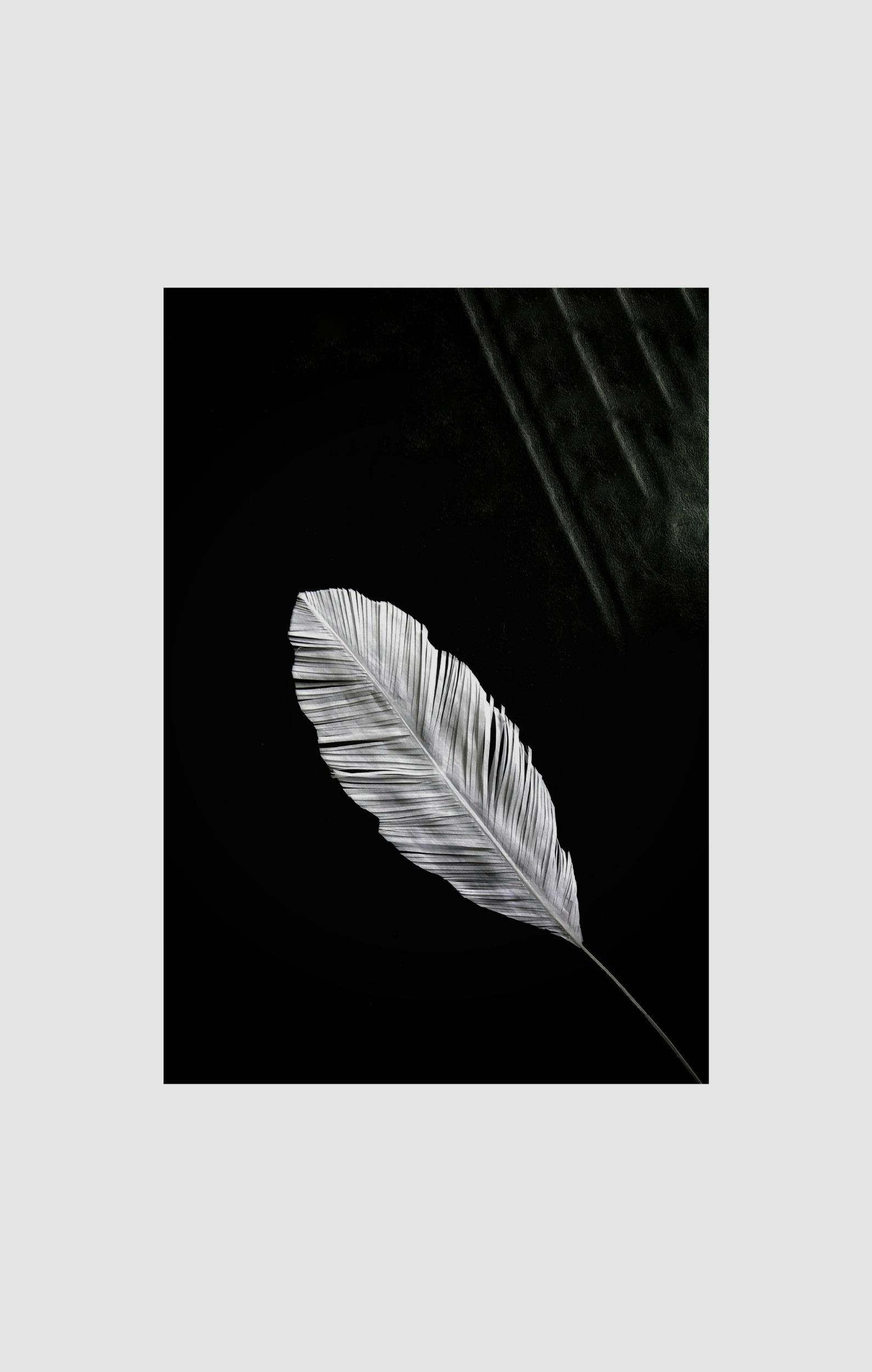 White Parchment Paper -