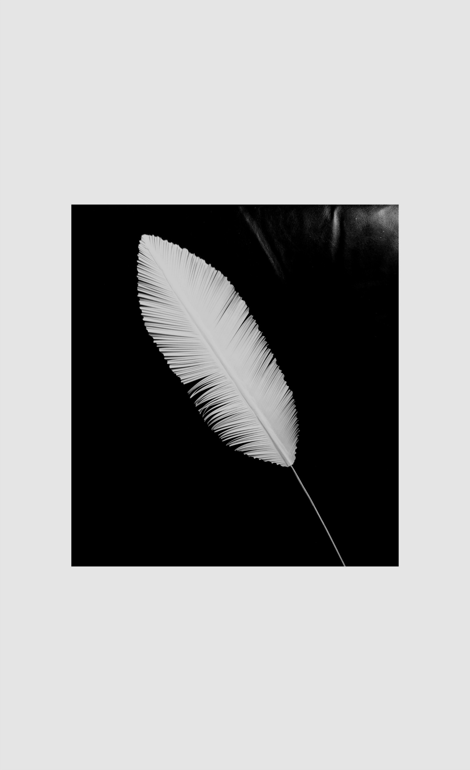 Cardstock - Paper Feather