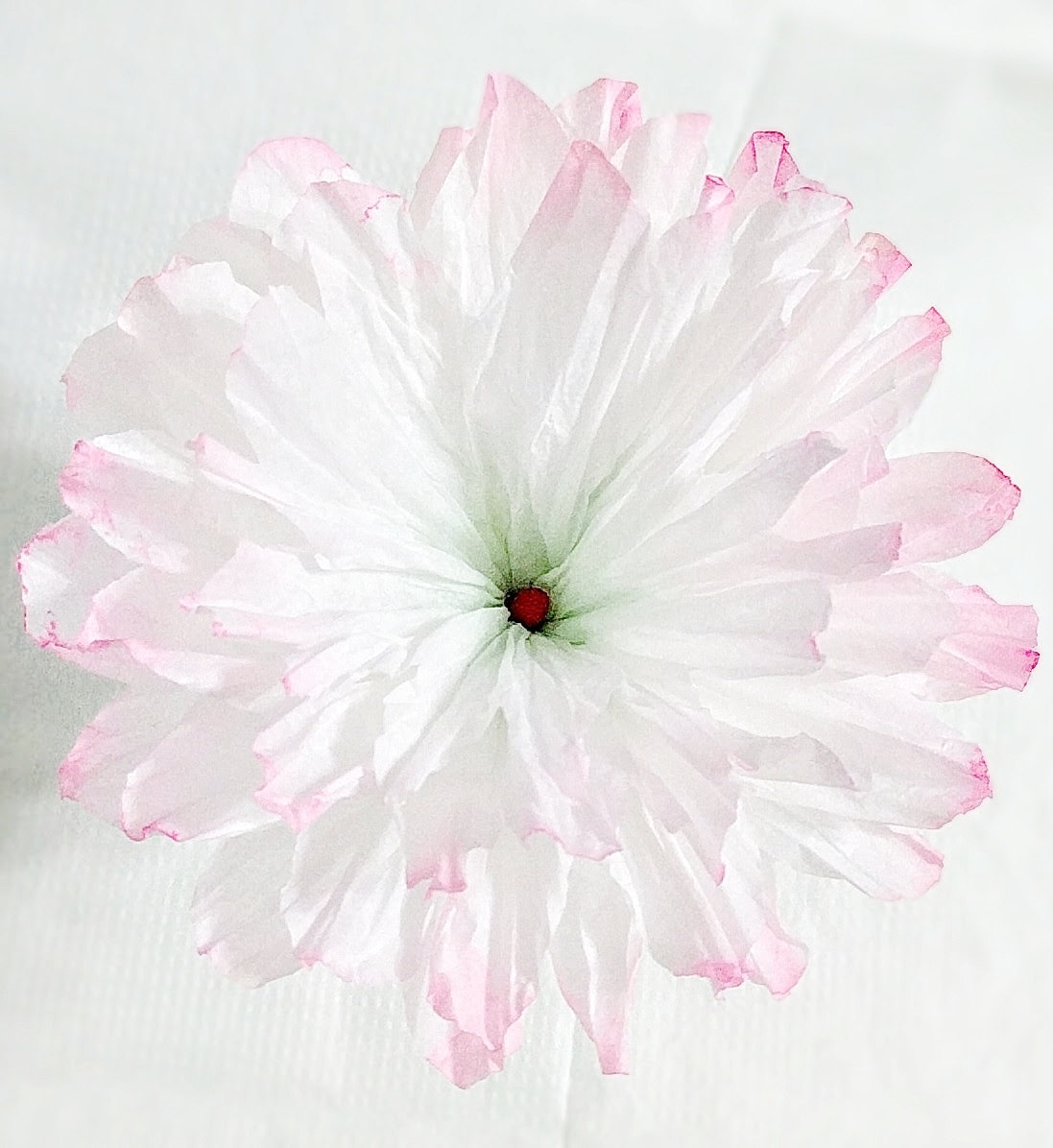 Coffee Filter Flowers - To get gradating pink edged petals and green gradation at the centre, I diluted craft paint and wet the coffee filters before dipping them into the mixture.