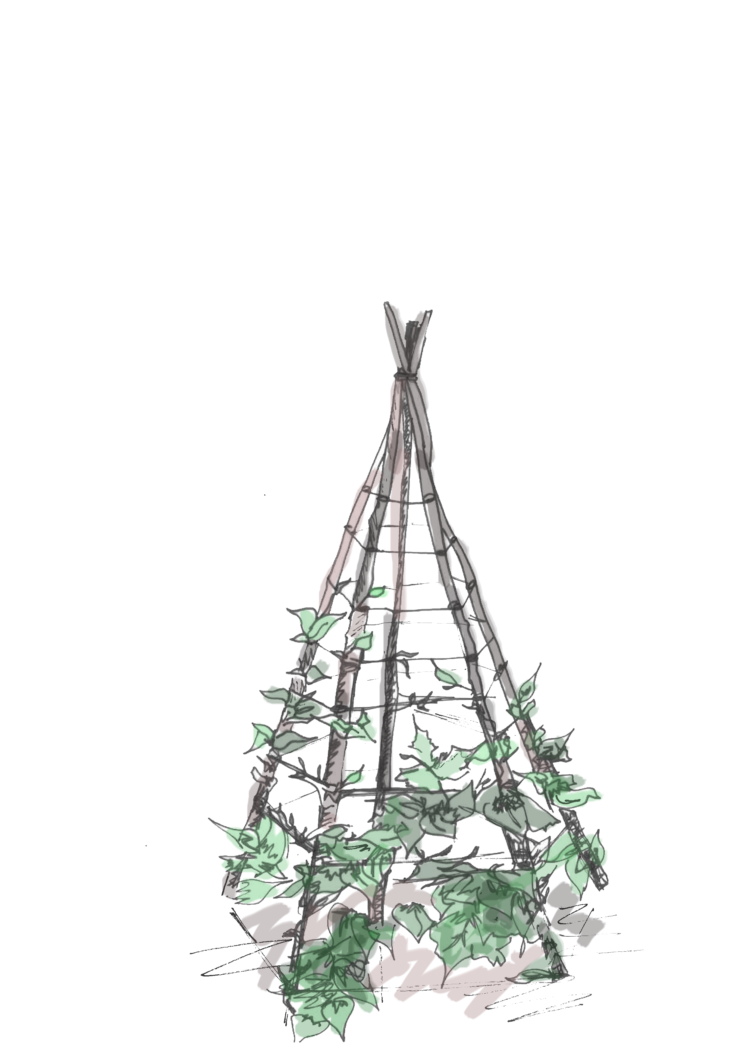 plant teepee.png