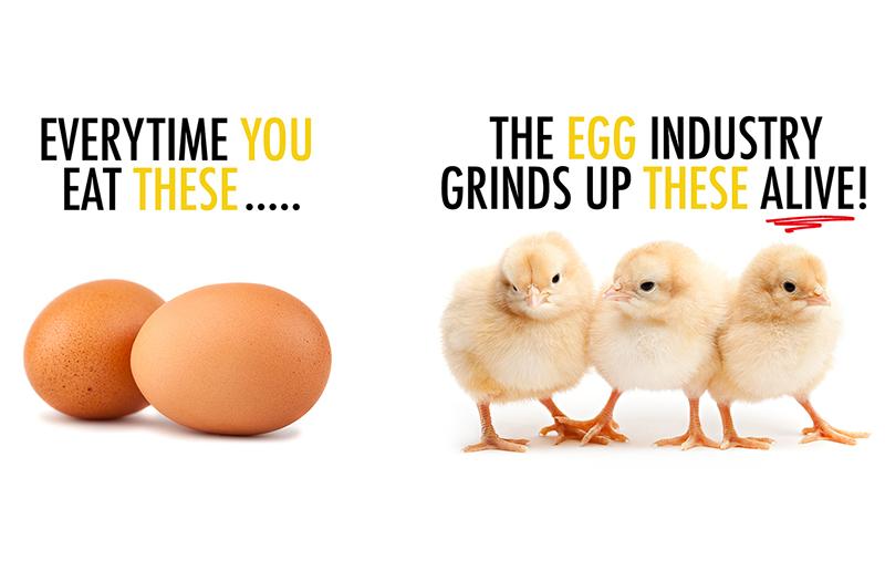 Egg-Truth_banner_SEO.jpg