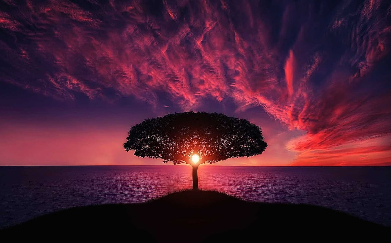 The sun sets through a silhouhette tree against a pink and purple sky - live life in alignment with your values