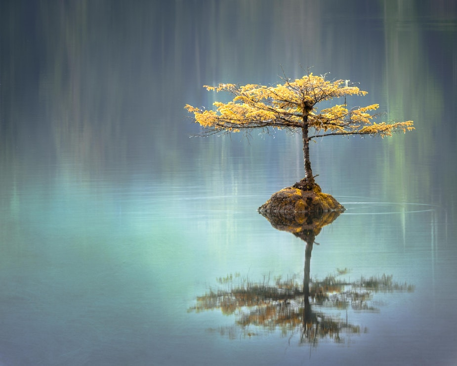 a yellow-leafed tree stands in a mirror-calm lake - how to become stress resilient