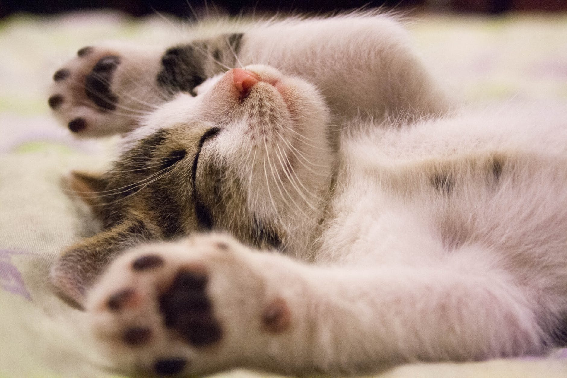 a kitten sleeping - top ten tips for refreshing sleep - life coaching for optimum wellbeing