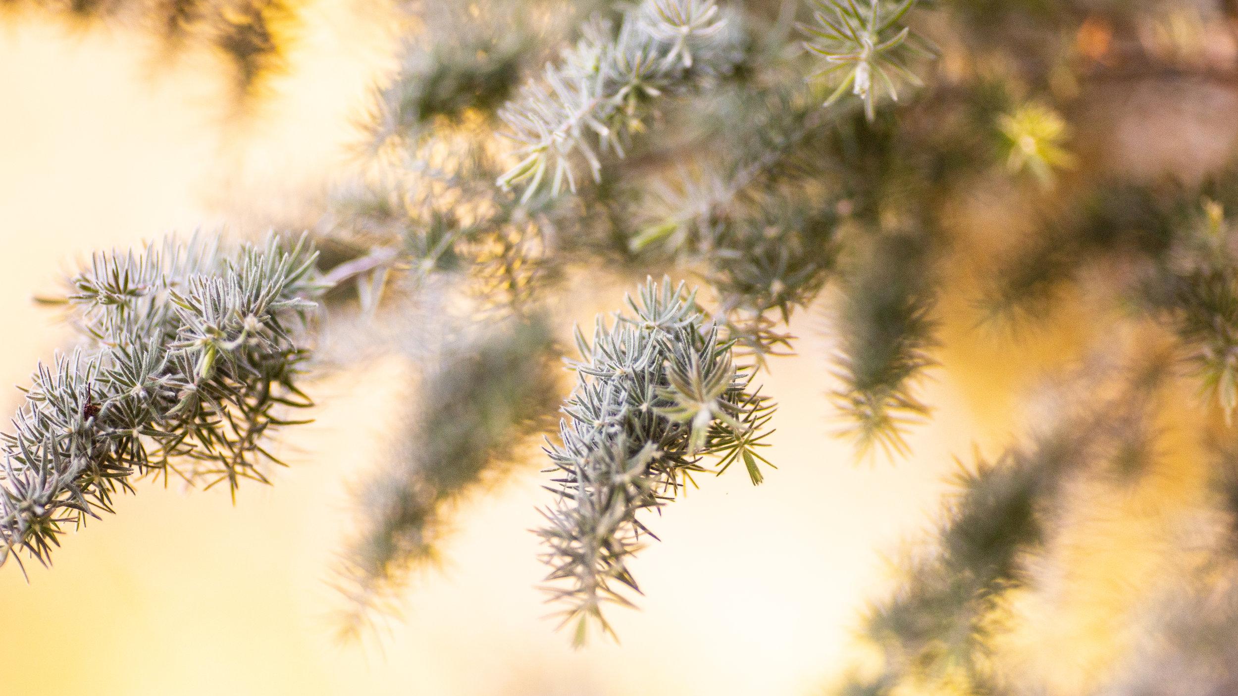 Nature-13.jpg