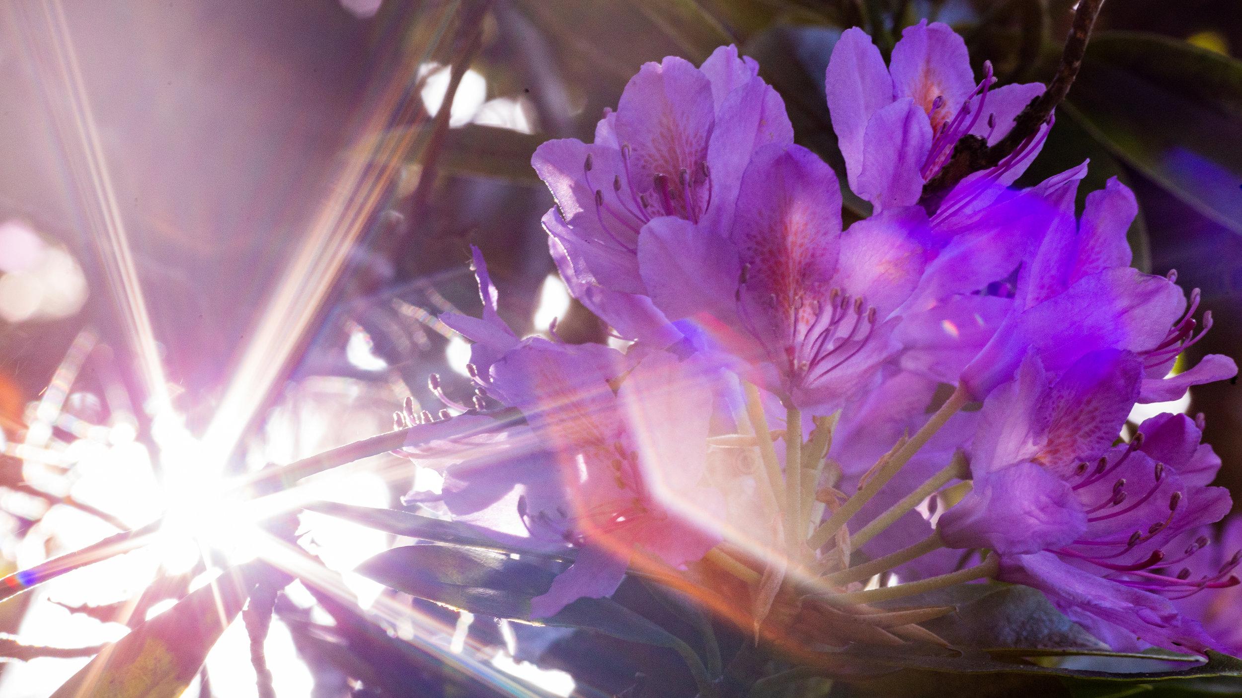 Nature-7.jpg