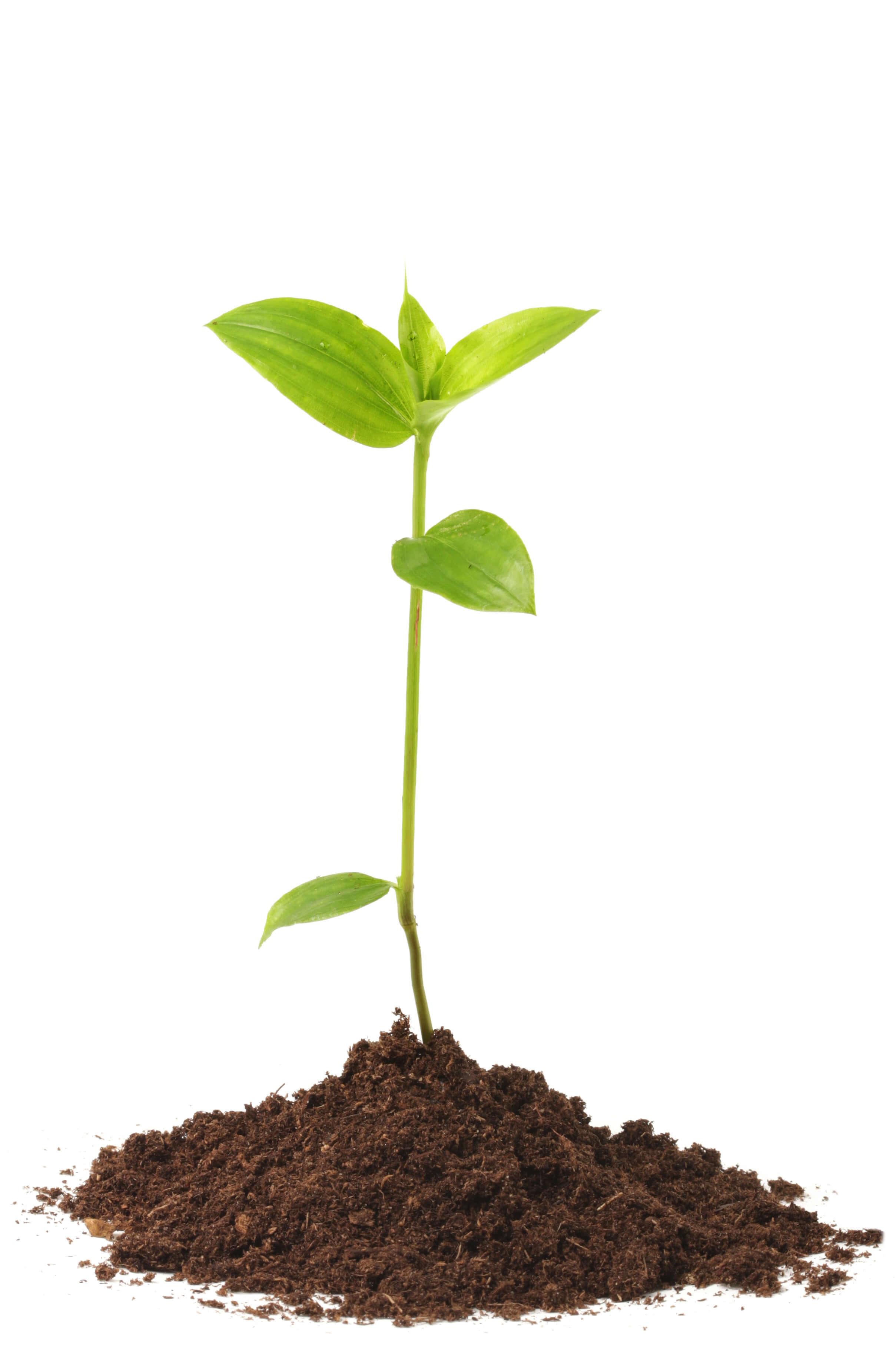 Plant_1_web.jpg