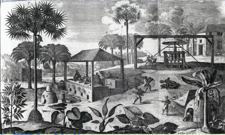 Sugarcane Plantation like those that dominated the Barbadian landscape in the 18th century / Courtesy of the William L. Clements Library, University of Michigan