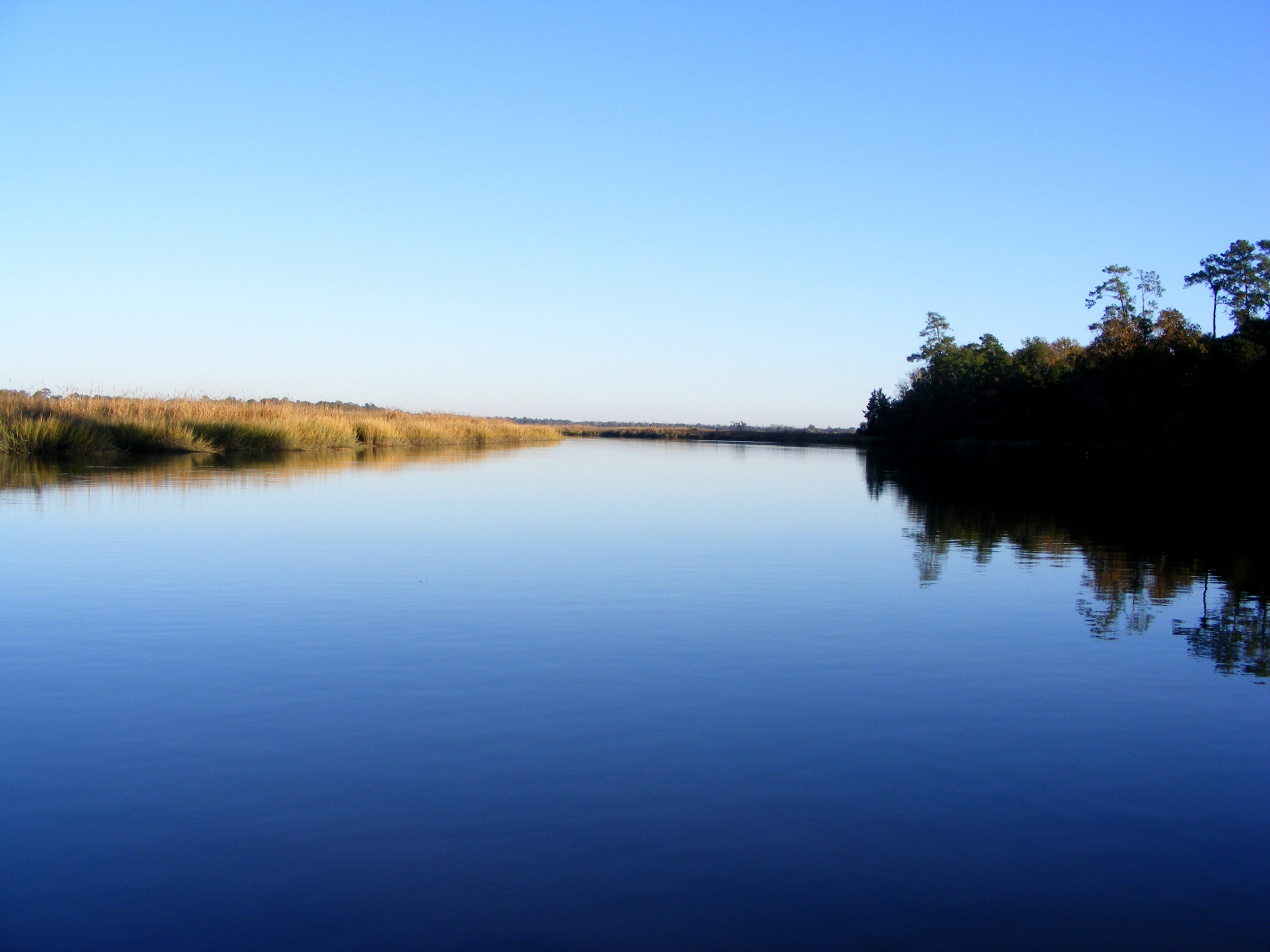 View of the Ashley River