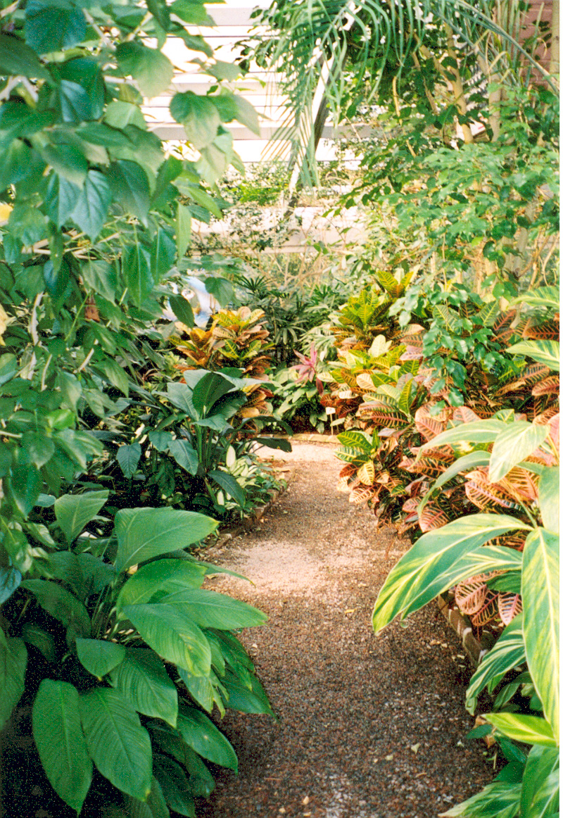 The Barbados Tropical Garden greenhouse exhibit contains plants native to Barbados, the original home of Thomas Drayton, the first owner of the plantation / Public domain / Photo by Kellie Thorne of NSBO