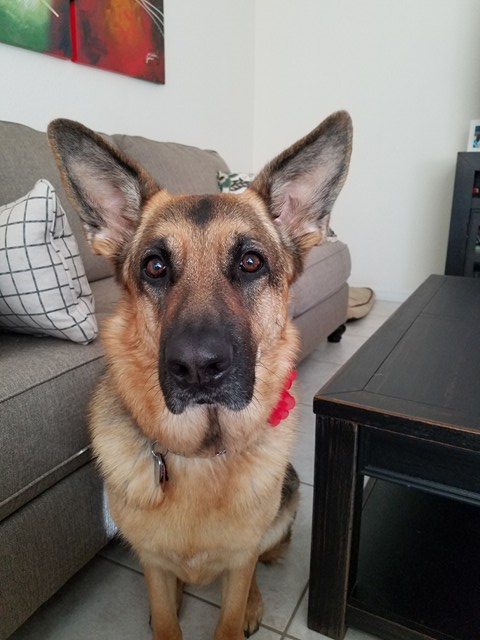 Abby (Roxy and Ruger)  3 yr. .jpg