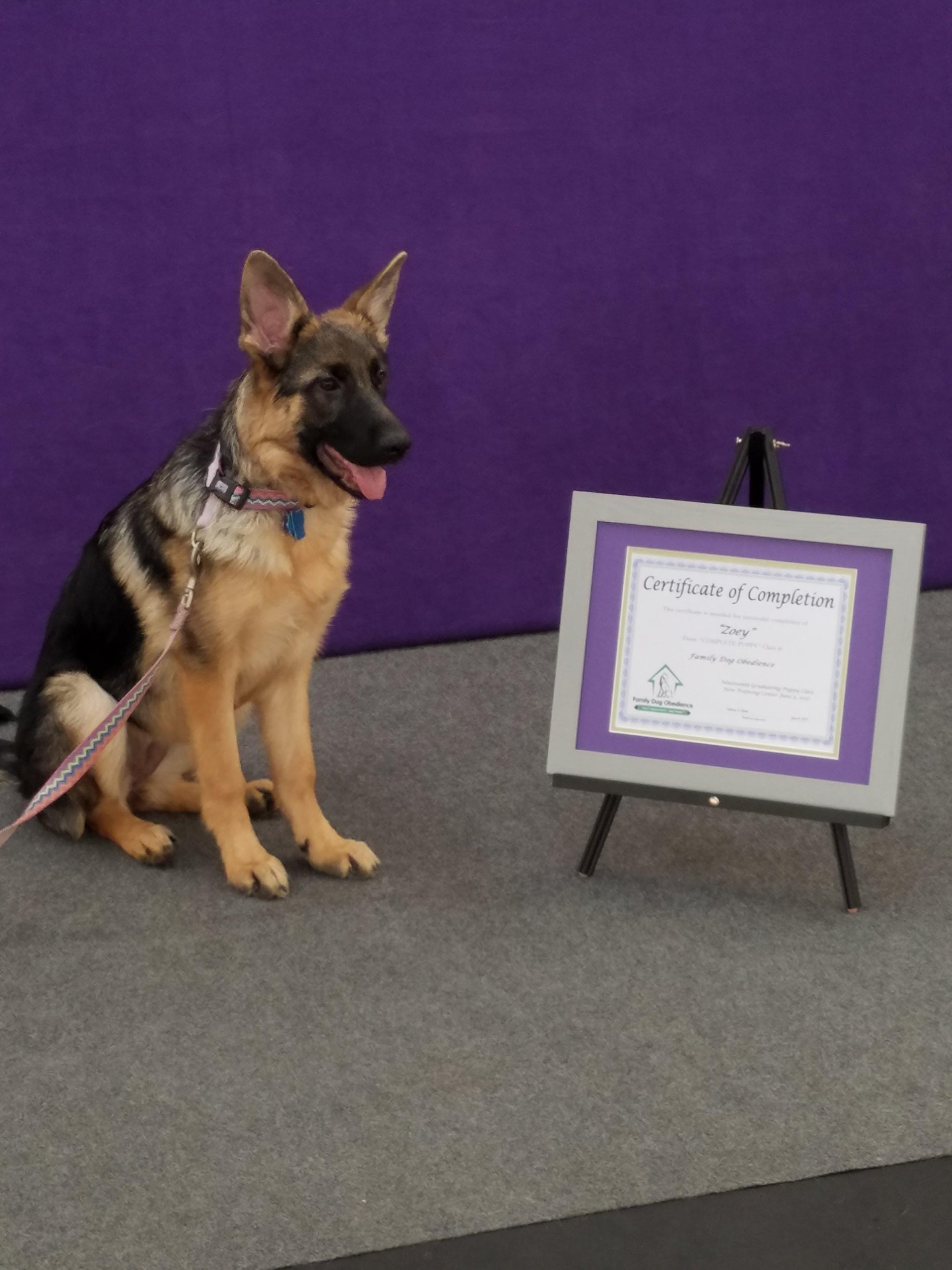 Zoey puppy class A .jpg
