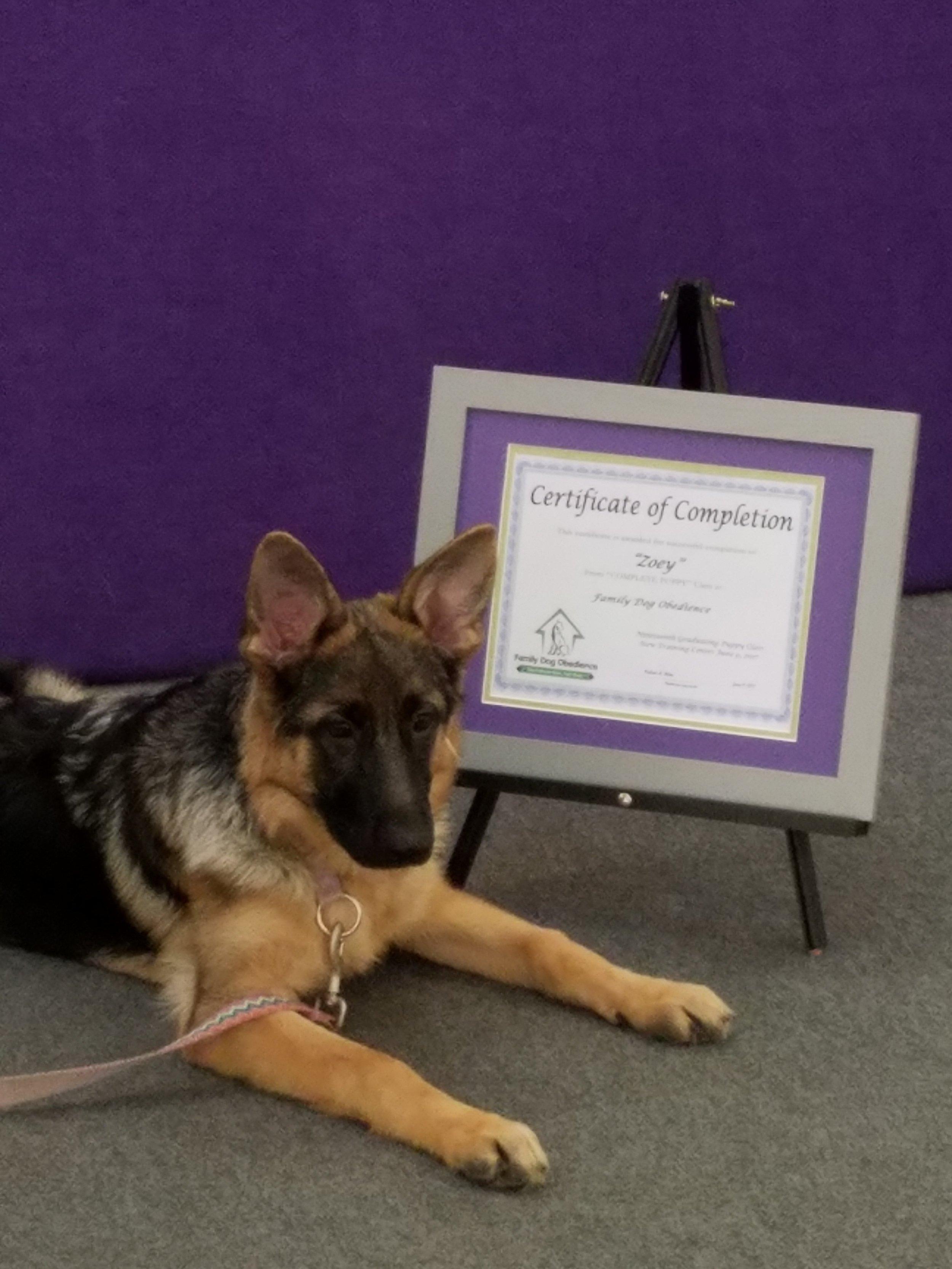 Zoey puppy class B .jpg