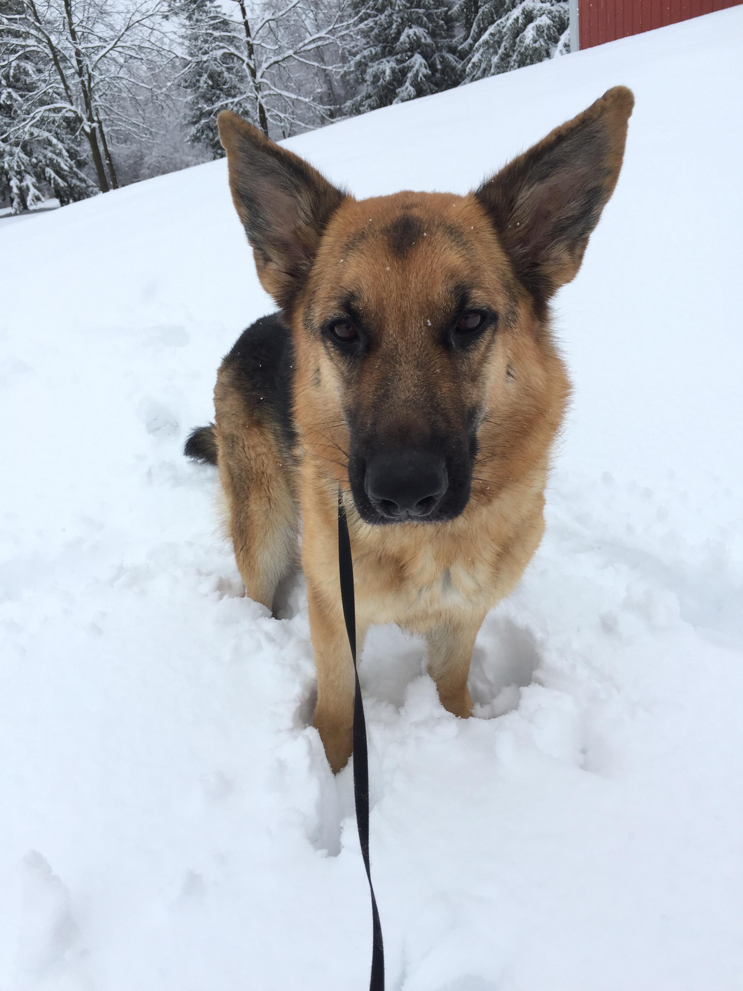 Snowy Zora A .jpg