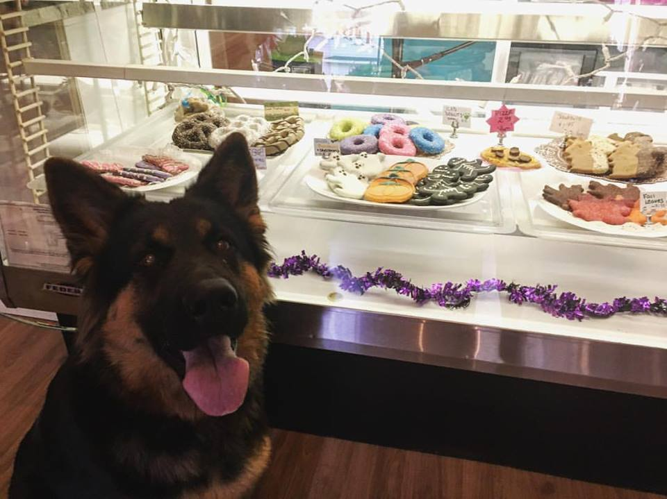 Harley at the Barkery .jpg