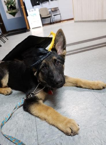 puppy class graduate .jpg