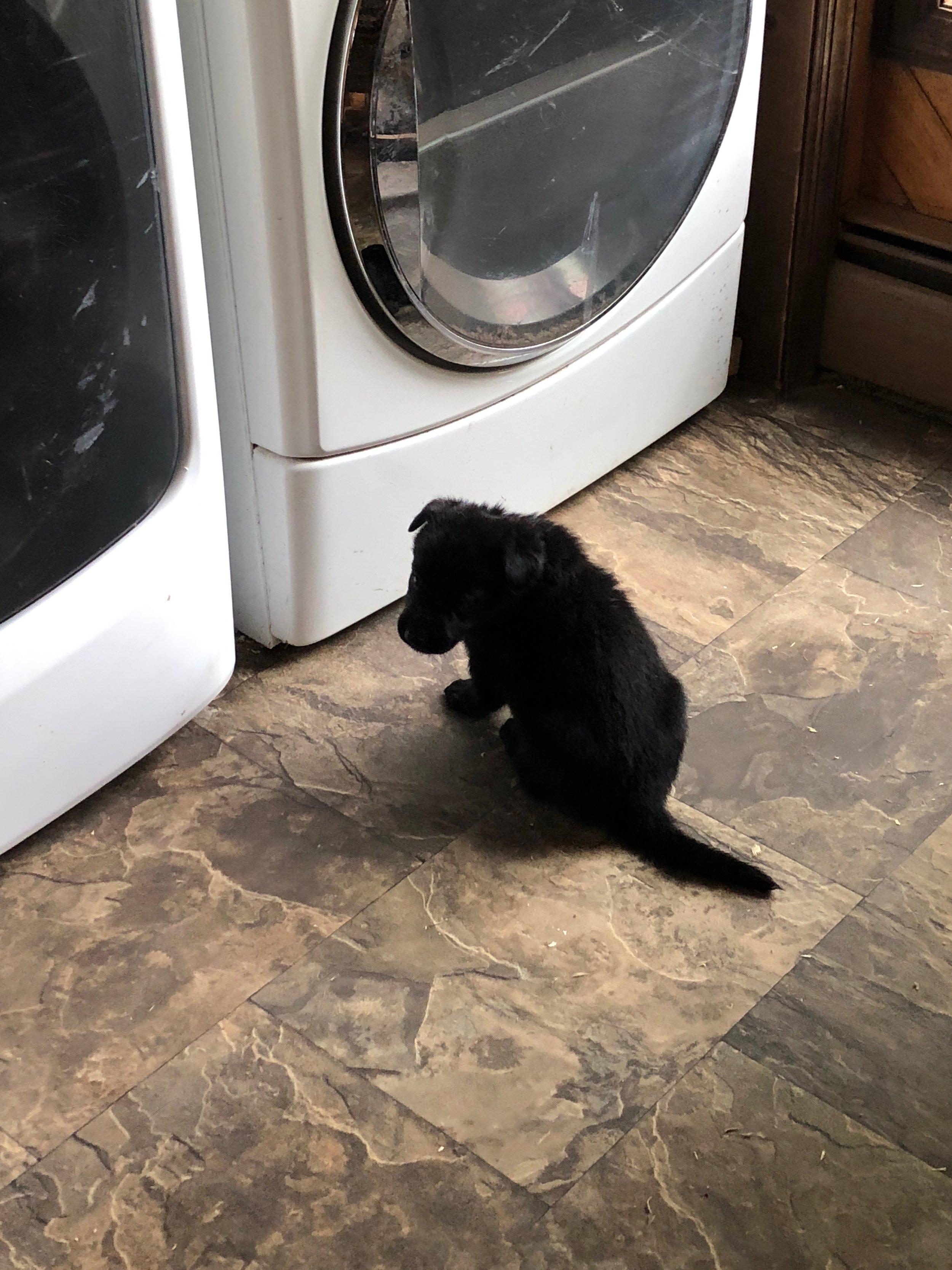 Dryer B .jpg