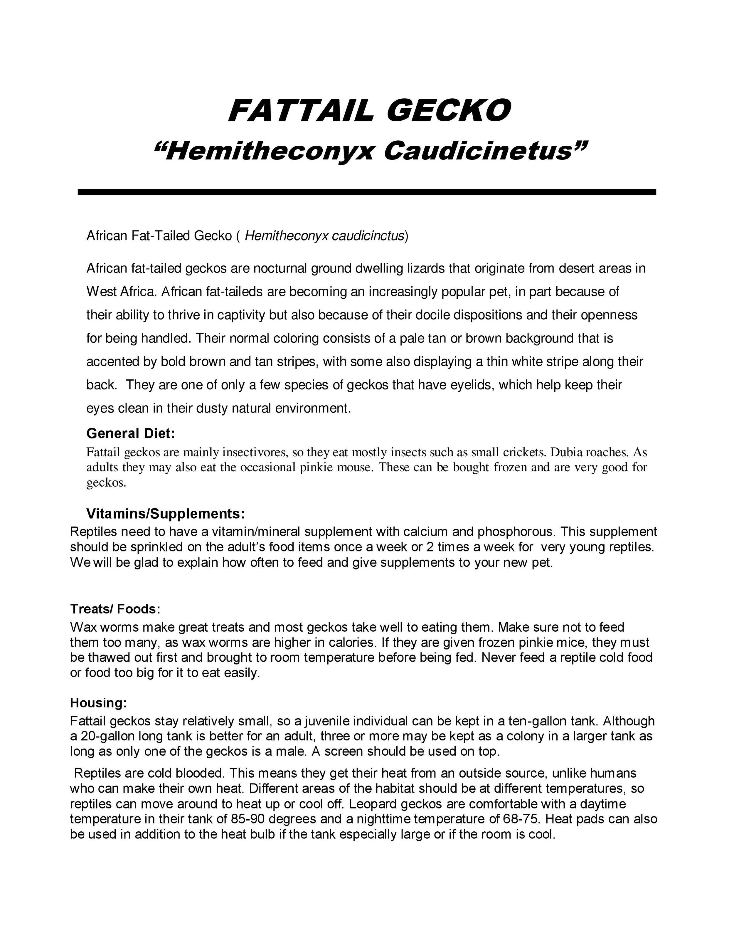 Fattail Gecko Caer Sheet pg1