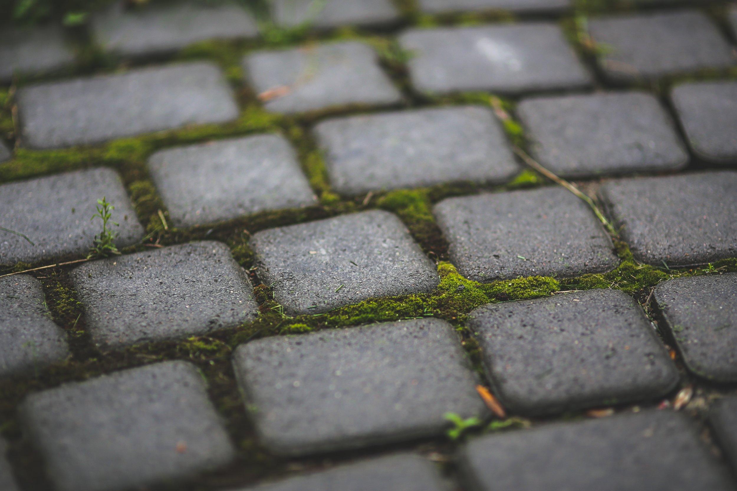 garden-moss-patio-6083.jpg