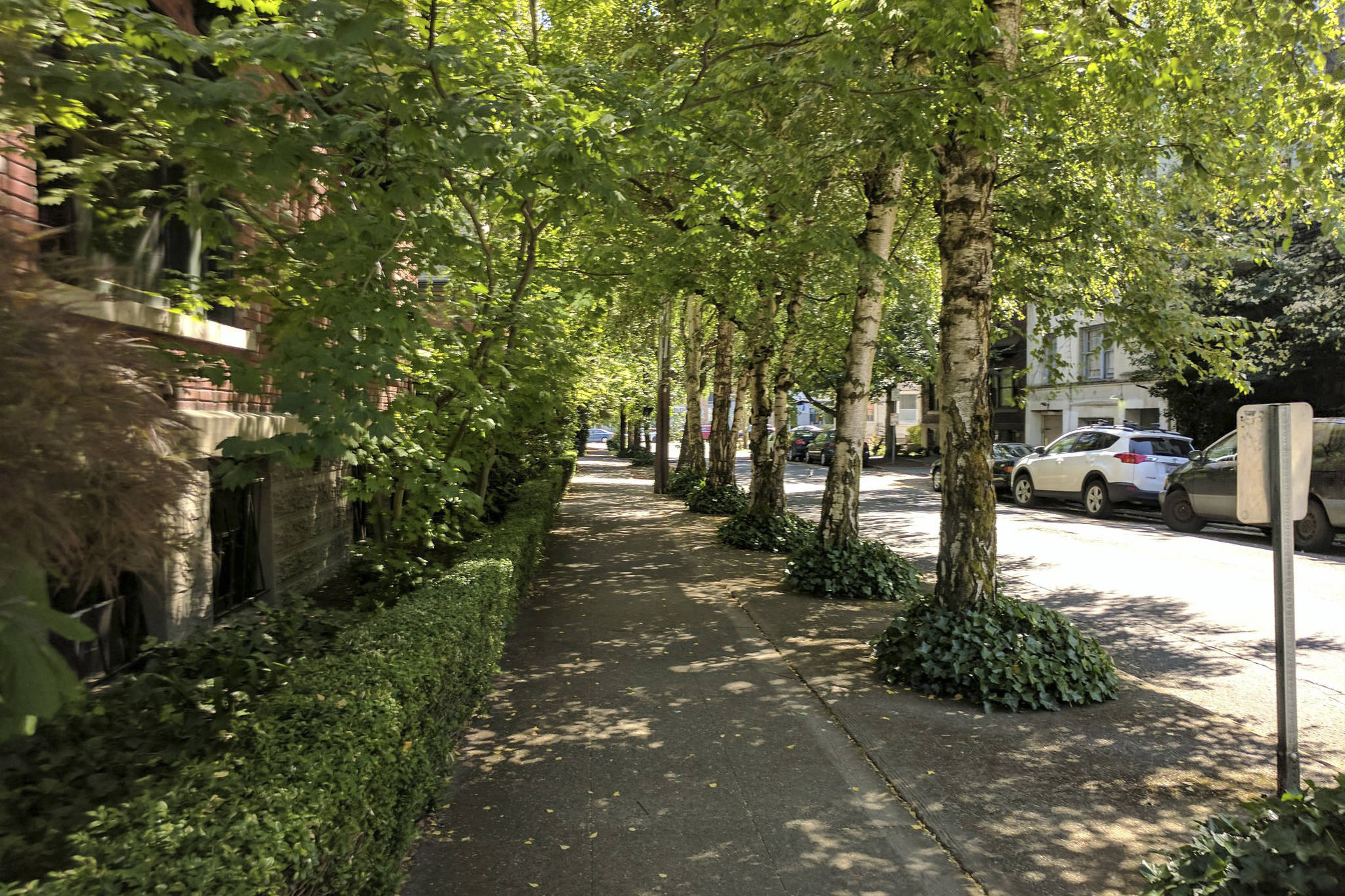Tree canopy provides shade to pedestrians and cleans the air