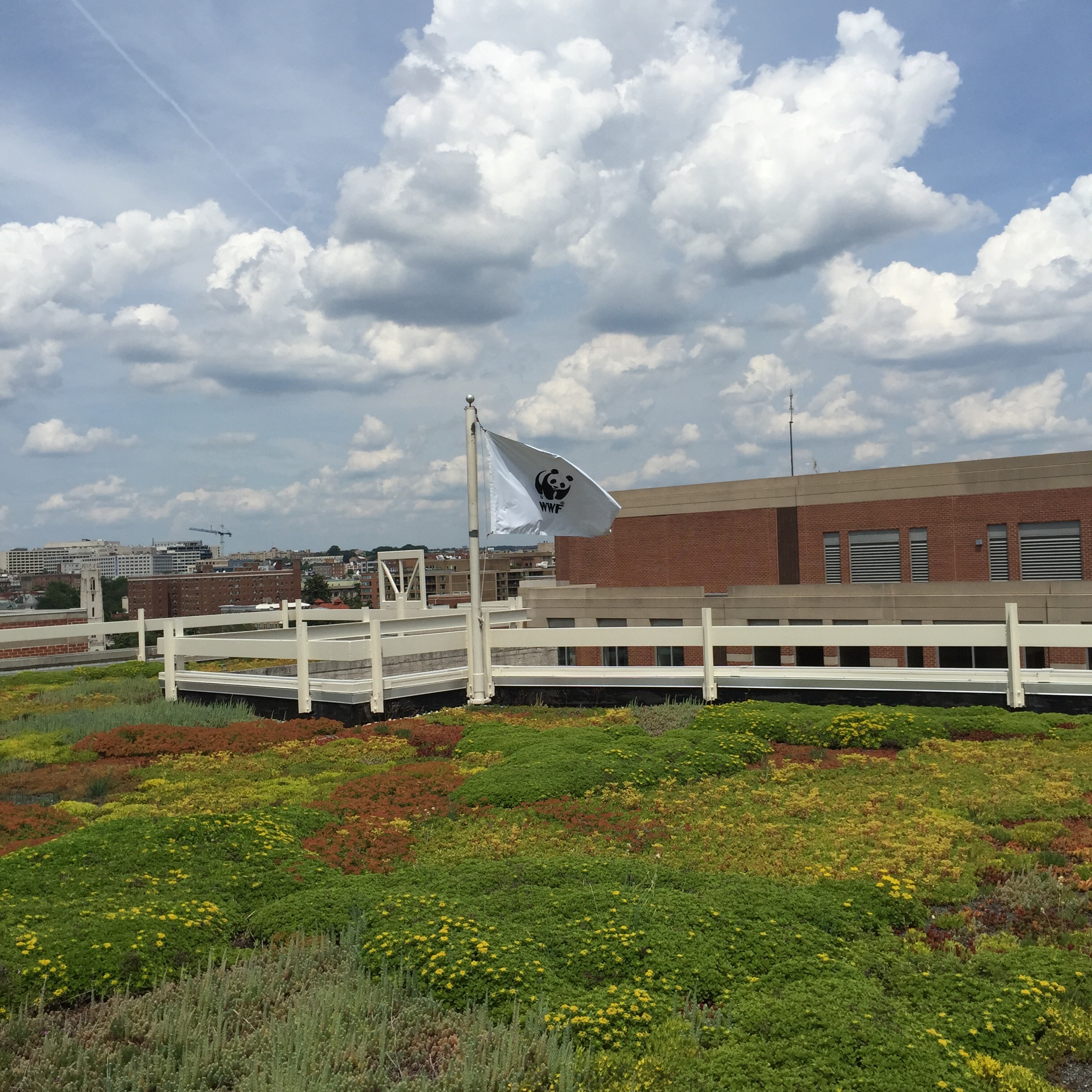 Green Roofs - Green roofs are covered in vegetation, which provides shading, reduces building energy use, cleans the air, and absorbs and better manages water.